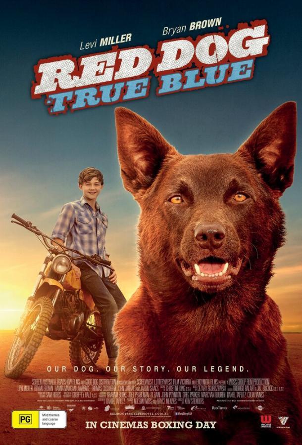 Рыжий пес: Самый верный