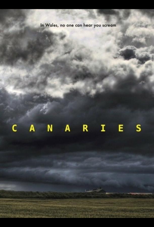 Канарейки
