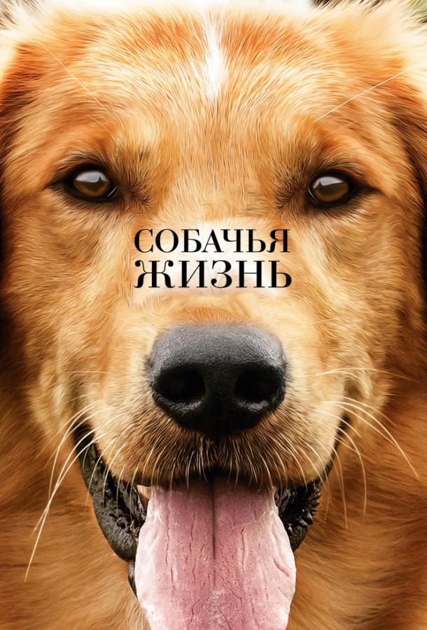 Собачья жизнь  (2017).
