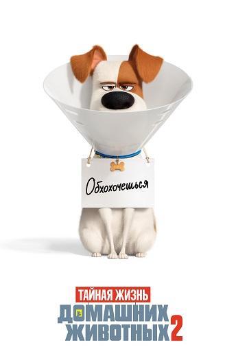 Тайная жизнь домашних животных 2  (2019).